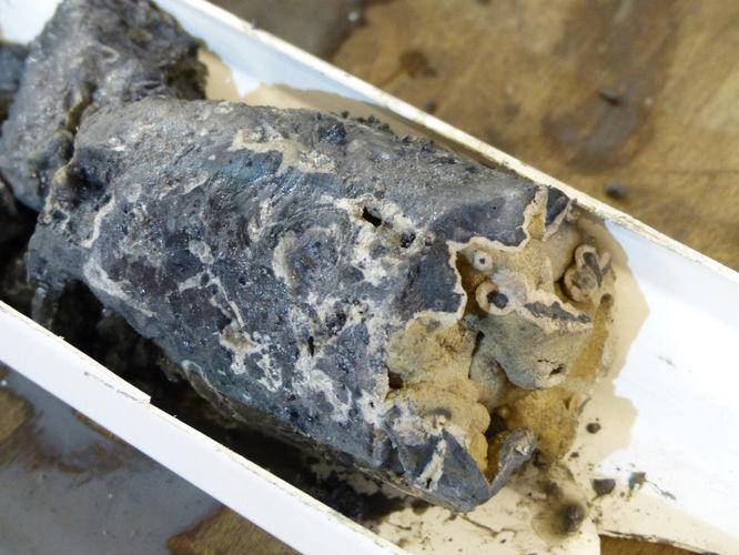 Teil eines Bohrkerns vom Vestnesa-Rücken mit gut sichtbarem Seep-Karbonat.Foto: MARUM – Zentrum